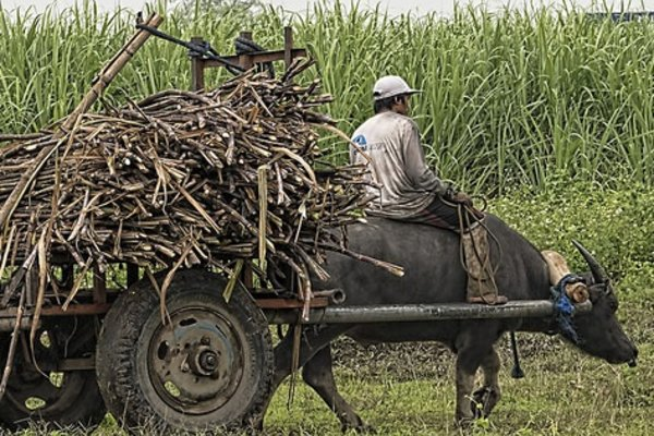Harvest Time Sugar Cane by Brian Evans (CC BY-ND 2.0)